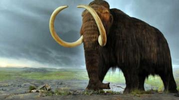 reviver-mamute